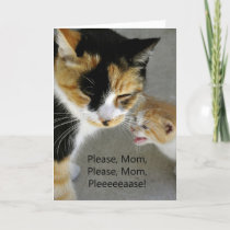Cute Kitten Mom Happy Birthday Card
