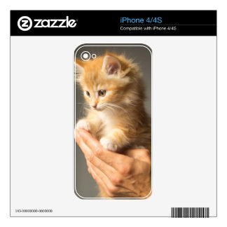 Cute Kitten on hands Skins For iPhone 4