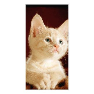 Cute kitten photo card