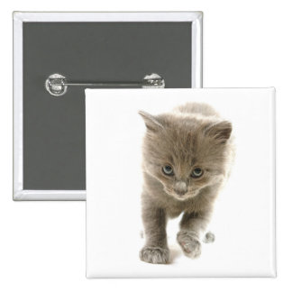 cute kitten pinback buttons