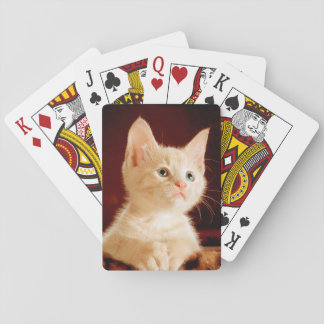 Cute kitten playing cards