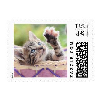 Cute Kitten Playing In Basket Postage