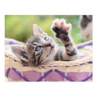 Cute Kitten Playing In Basket Postcard
