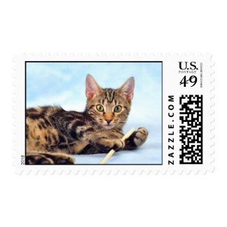 Cute kitten playing postage