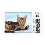 Cute kitten playing stamp
