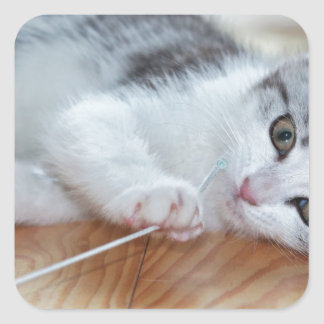 Cute Kitten playing with string Square Sticker