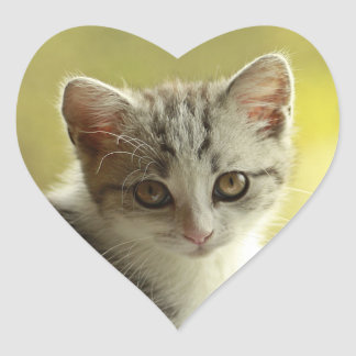 Cute kitten portrait heart sticker
