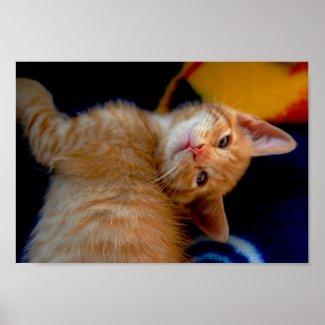 Cute Kitten Poster print