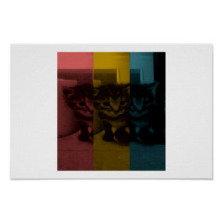 Cute Kitten , Red, Yellow and Blue. Poster