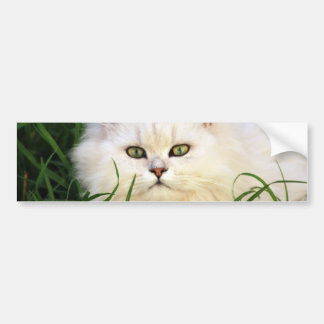 Cute Kitten resting Bumper Sticker