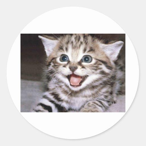 Cute Kitten Round Stickers