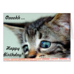 Cute Kitten says happy Birthday Cards