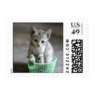 Cute kitten sitting in a green basket postage