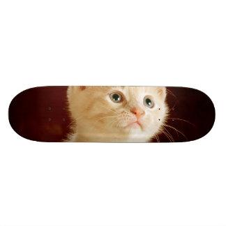 Cute kitten skate decks