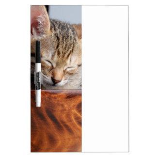 Cute Kitten sleeping in bowl Dry Erase Board