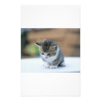 Cute Kitten Custom Stationery