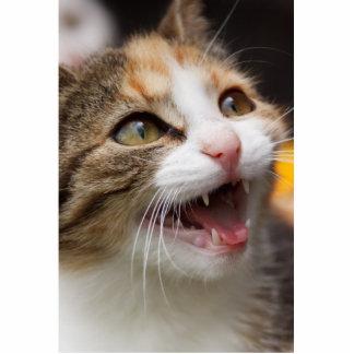 Cute Kitten Statuette
