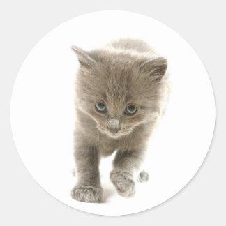 cute kitten round sticker