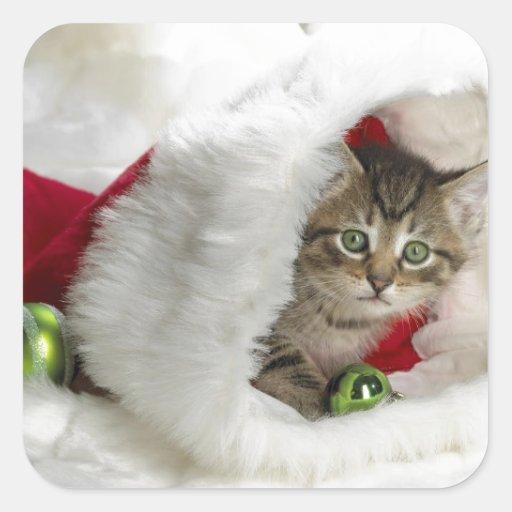 Cute Kitten Square Stickers