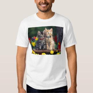 Cute-Kitten T-shirt