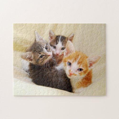 Cute Kitten Trio Jigsaw Puzzle