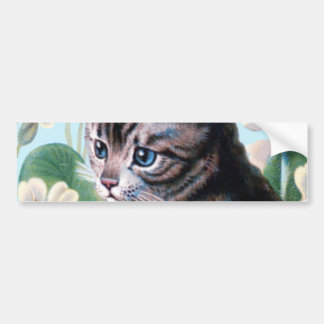 Cute kitten - vintage cat art bumper sticker