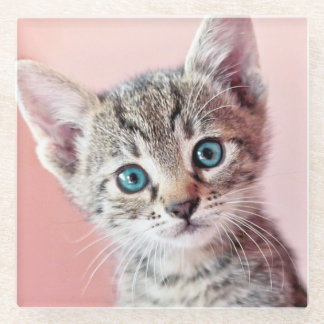 Cute kitten with blue eyes. glass coaster