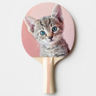 Cute kitten with blue eyes. Ping-Pong paddle