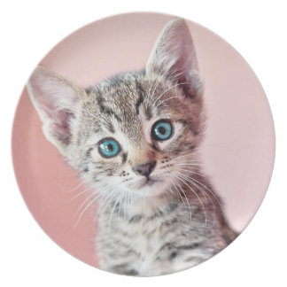 Cute kitten with blue eyes. dinner plates