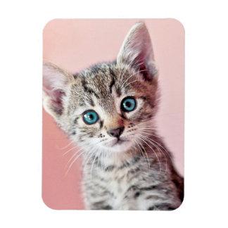 Cute kitten with blue eyes. rectangular photo magnet