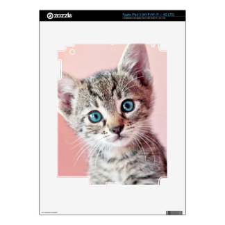 Cute kitten with blue eyes. skin for iPad 3