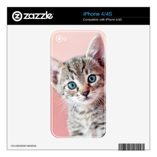 Cute kitten with blue eyes. skin for the iPhone 4