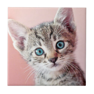 Cute kitten with blue eyes. small square tile