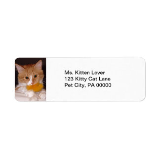 Cute Kitten with Fluffy Toy Return Address Labels