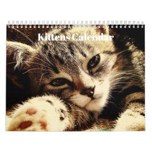 Cute Kittens 2019 Calendar