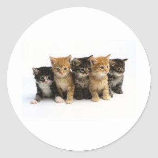 cute kittens classic round sticker