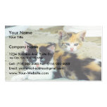 Cute Kittens Laying On Floor Business Card Template