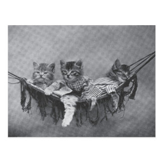 Cute Kittens Postcard