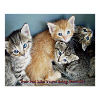 Cute kittens poster print print
