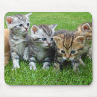Cute kittens sitting in grass mouse pad