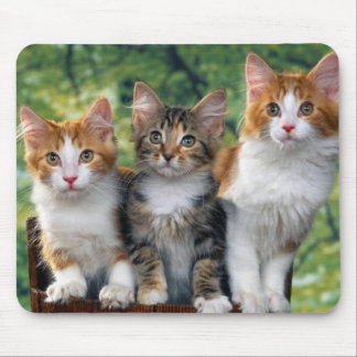 cute-kittens-with-nature-backgrounds_jpg 3 mousepad