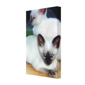 Cute Kittens Wrapped Canvas Canvas Print