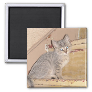 Cute Kitty 2 Inch Square Magnet