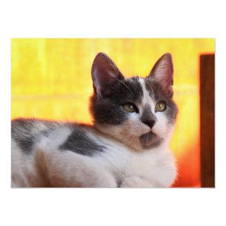 Cute Kitty in the Sunshine Card