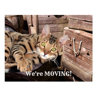 Cute Kitty Moving House New Address Postcard