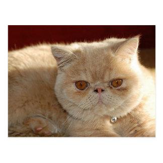 Cute Kitty Postcard