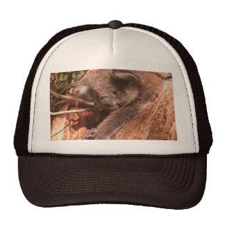 Cute Koala 1214 Trucker Hat