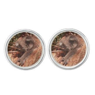 Cute koala 1214 cufflinks