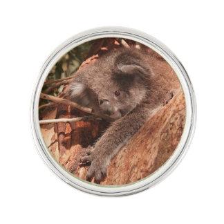 Cute koala 1214