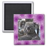 cute koala 2 inch square magnet